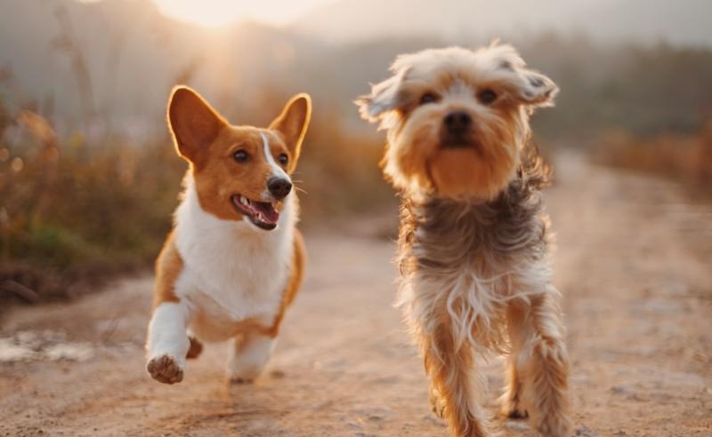 გერმანიაში ძაღლების მიერ გამოყოფილ მხუთავ აირზე კომპენსაციას ითხოვენ