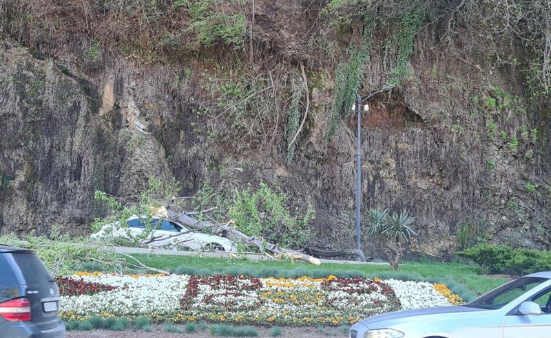 თბილისში ავტომობილს ხე დაეცა