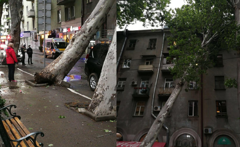 თბილისში, კავსაძის ქუჩაზე, ხე წაიქცა