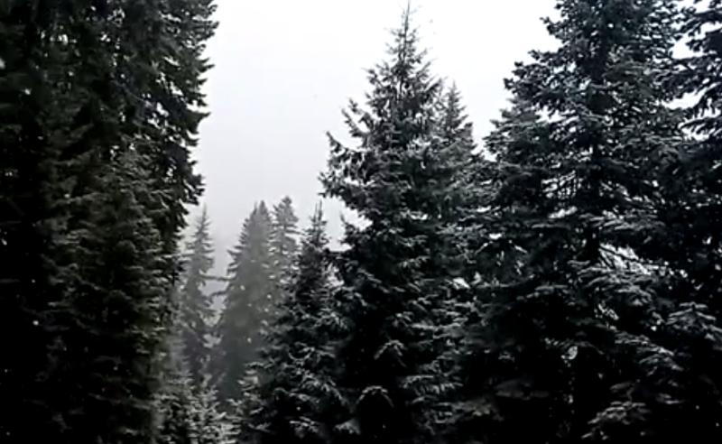 უამინდობა საქართველოში - ბახმაროში თოვს