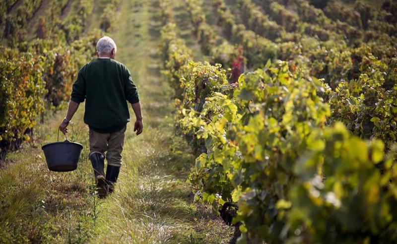 ფერმერები იჯარით აღებული მიწის გამოსყიდვას 25%-იანი შეღავათით შეძლებენ - საქართველოს მთავრობა