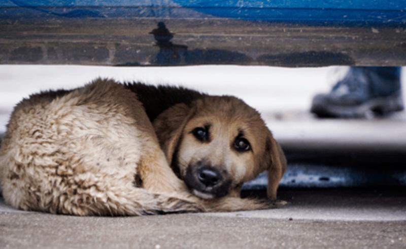 უმძიმესი კადრები ბათუმიდან - ნაგავსაყრელზე გადაყრილი ძაღლები (ვიდეო)