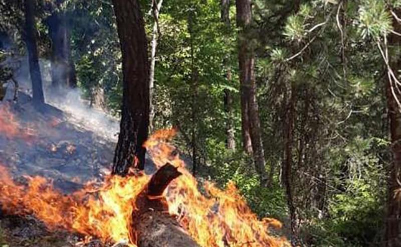 ძლიერი ხანძარი მთიულეთში - ჭიკანში ტყე იწვის